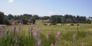 Mes vacances en Auvergne (Haute Loire)